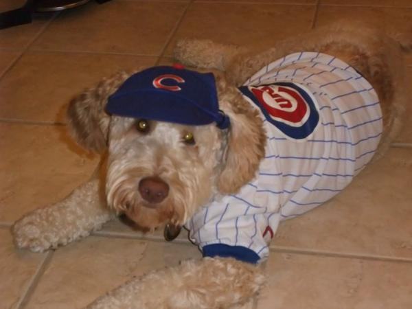 detailed look 7a316 10934 cubs dog – Bleacher Nation | Chicago Sports News, Rumors ...