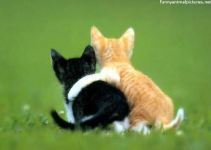kitten-best-friends