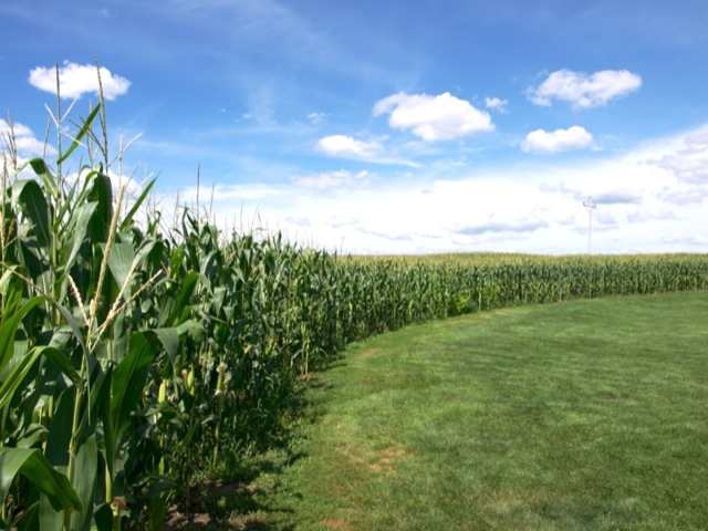 iowa field of dreams
