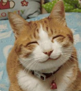 relieved happy cat