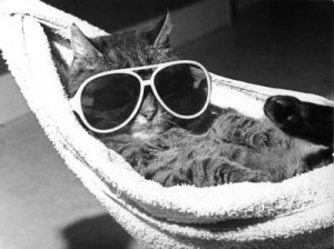relax cat sunglasses