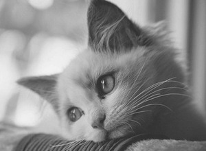 sad thoughtful cat