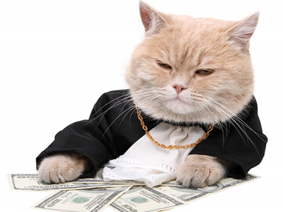 money cat