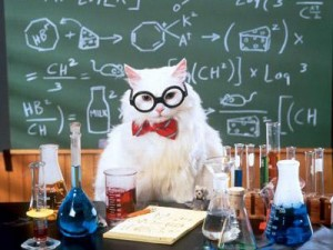 teacher cat