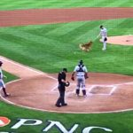 BIF: Very Good Bat Dog Skips the Bat and Goes for the Baseball Instead